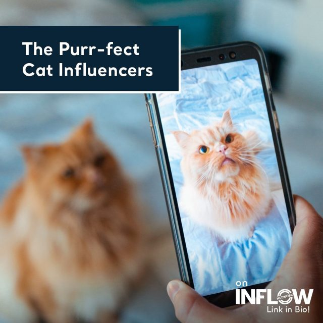 Happy World Cat Day! Today, we're talking about cat influencers! And no, that's not a typo. 🐈 Hit the link in our bio to learn all about our favorite cat influencers, and whether they are the right choice for your brand! #INFLOWNetwork #WorldCatDay #CatsofInstagram